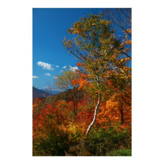 Autumn Foliage Poster