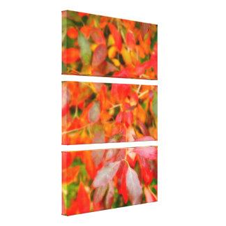 Autumn foliage stretched canvas print