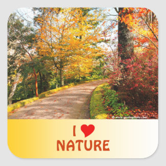 Autumn footpath in Azores Square Sticker