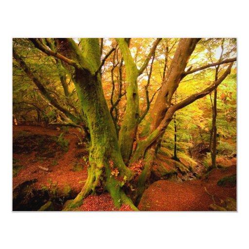 Autumn Forest Card