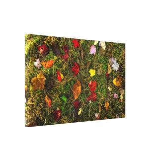 Autumn forest floor canvas prints