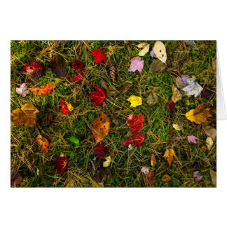 Autumn forest floor card