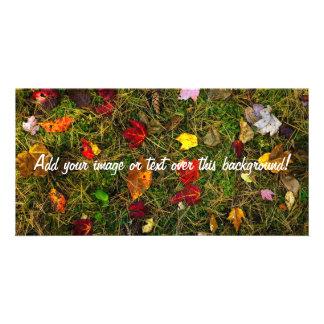 Autumn forest floor photo card