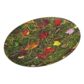 Autumn forest floor plate