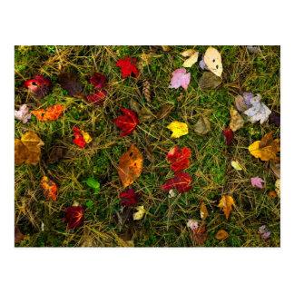 Autumn forest floor postcard