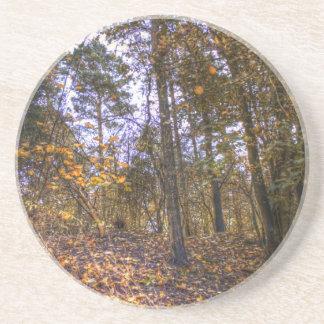 Autumn Forest HDR Beverage Coaster
