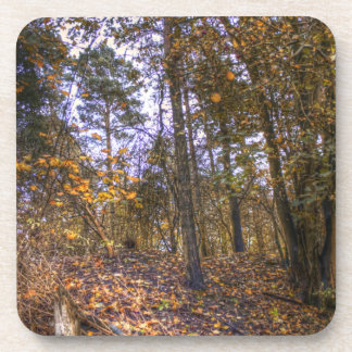 Autumn Forest HDR Drink Coasters