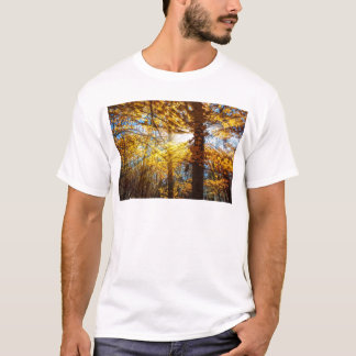 Autumn Forest Light T-Shirt