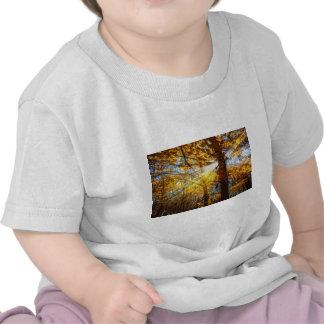 Autumn Forest Light T Shirt