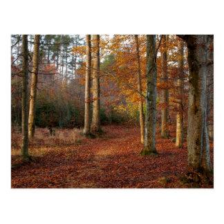 Autumn forest path postcard