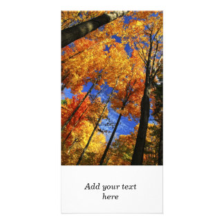 Autumn forest photo card template
