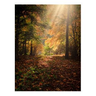 Autumn-forest Postcard