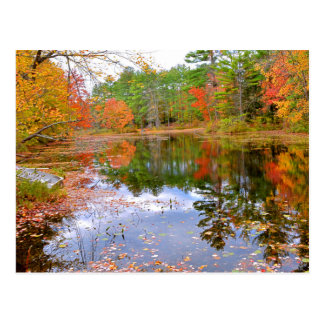 Autumn Forest Reflected in Pond Postcard