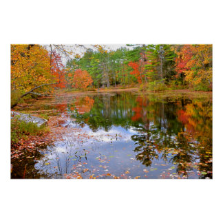 Autumn Forest Reflected in Pond Poster