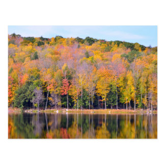 Autumn Forest Reflecting in Pond Postcard