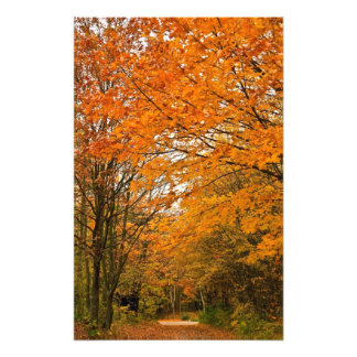 Autumn Forest Track Photo Print