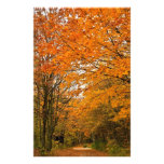 Autumn Forest Track Photograph