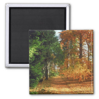Autumn Forest Walk 2 Inch Square Magnet