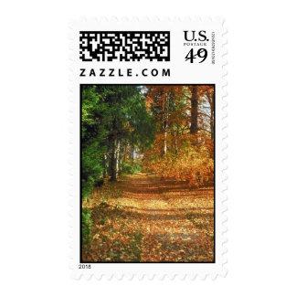 Autumn Forest Walk Stamp