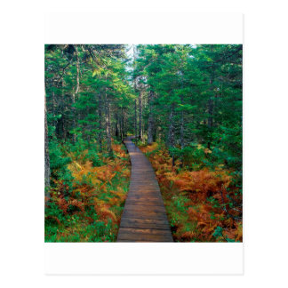 Autumn Fundy New Brunswick Postcard