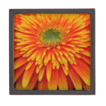 Autumn Gerbera Daisy Gift Box Premium Keepsake Boxes