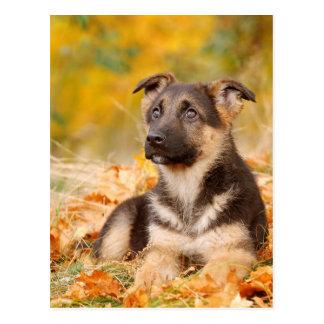 Autumn German shepherd dog puppy Postcard