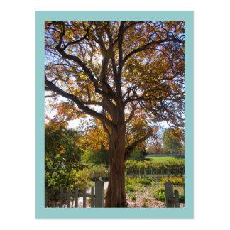 Autumn Glory Postcard