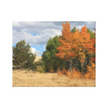 Autumn Glory Wrapped Canvas Stretched Canvas Prints