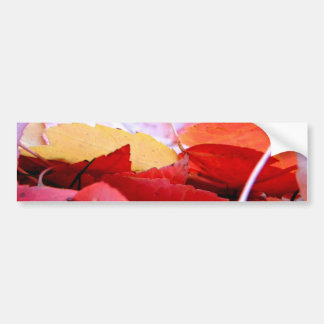 Autumn Glow Car Bumper Sticker