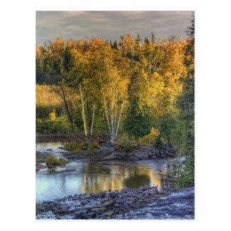 Autumn Gold Postcard