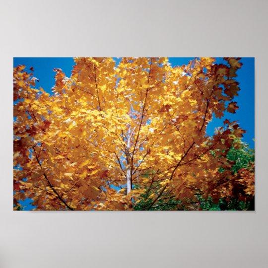 Autumn Golden Tree Poster