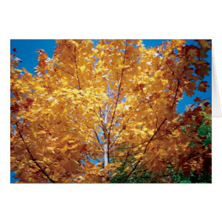 Autumn Golden Tree Stationery Note Card