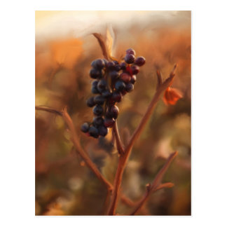 Autumn grapes postcard