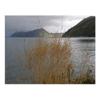 Autumn Grass by Illiuliuk Bay Postcard