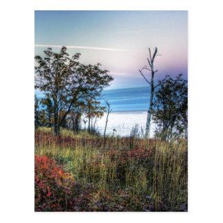 Autumn Grass Postcard