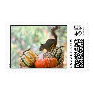 Autumn Harvest Squirrel Stamps