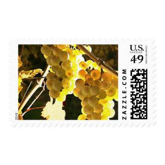 Autumn Harvest Vineyard Watercolor Postage Stamp