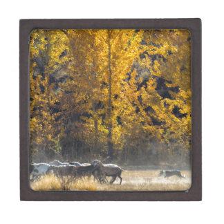 Autumn Herding Gift Box