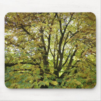 Autumn Horse Chestnut Tree Mouse Pad