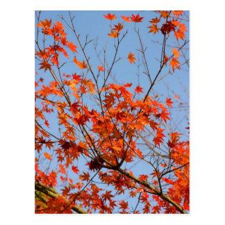Autumn III Postcard