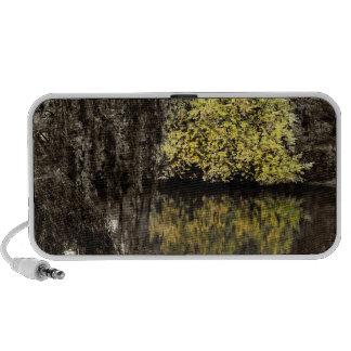 Autumn in Central Park Photo Travelling Speaker