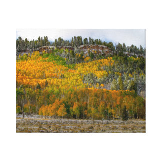 Autumn in Colorado Canvas Print