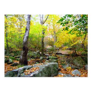 Autumn in Connecticut Postcard