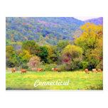 Autumn in CT Postcard