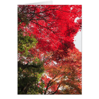 Autumn in Japan Cards