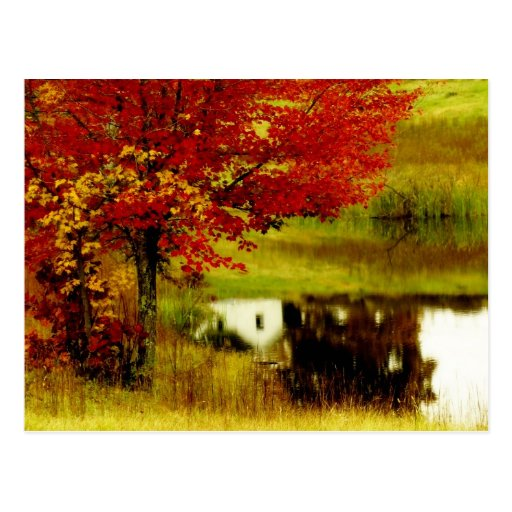 Autumn in Kentucky Post Cards