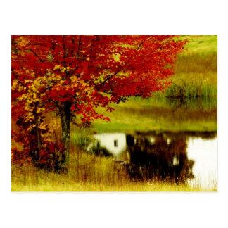 Autumn in Kentucky Postcard