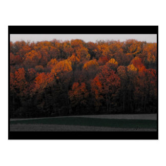 ~ Autumn in Lancaster County ~ 43 Postcard