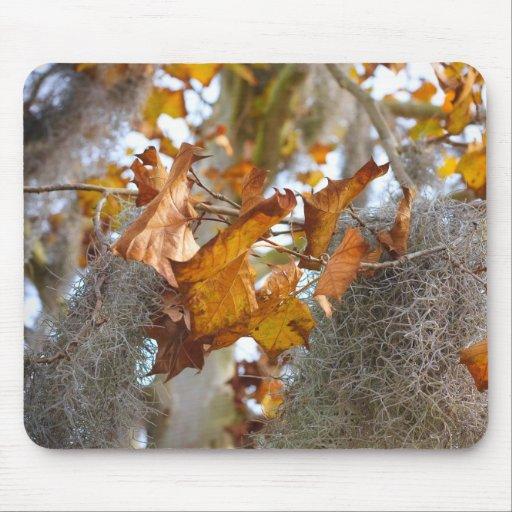 Autumn in Louisiana Mousepad