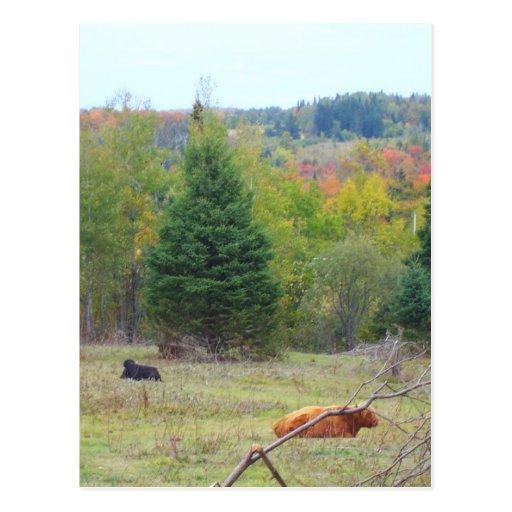 Autumn_In_Maine_3 Tarjeta Postal